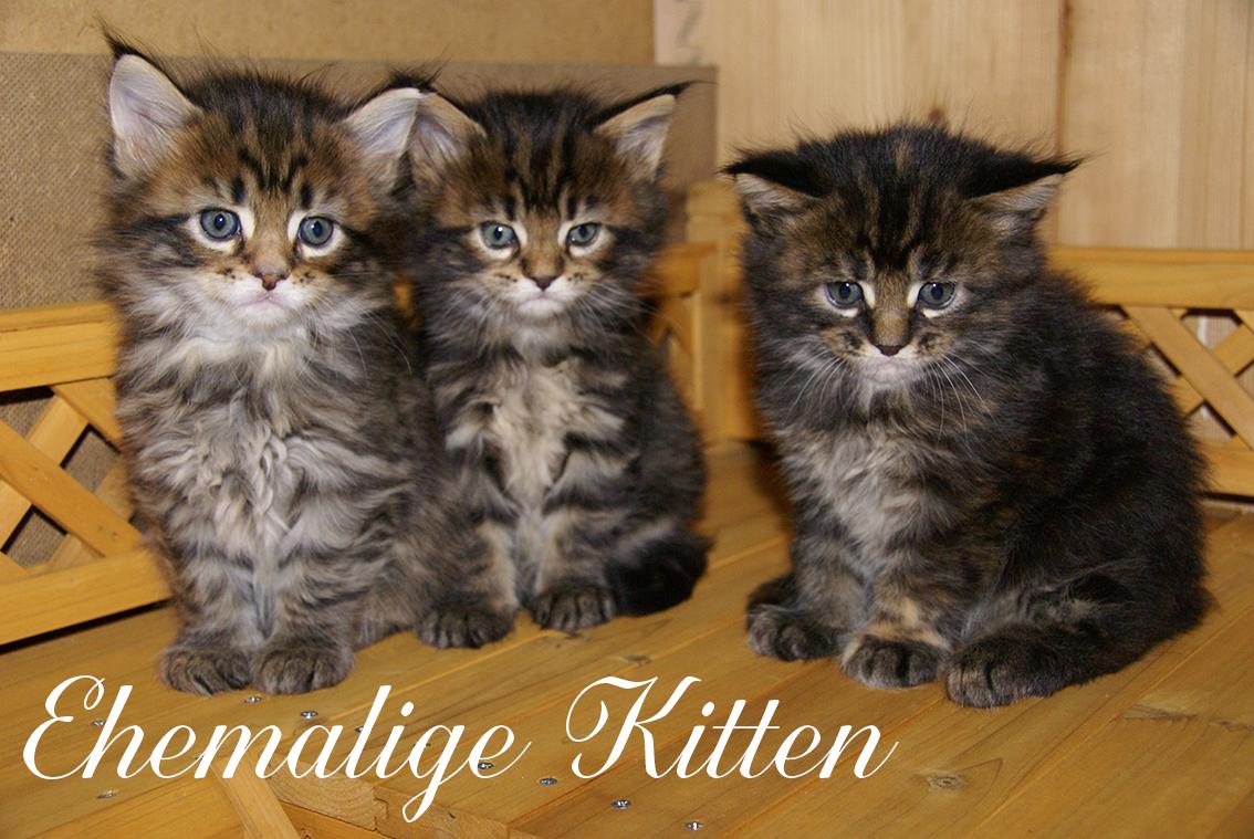 Galerie Ehemalige Kitten